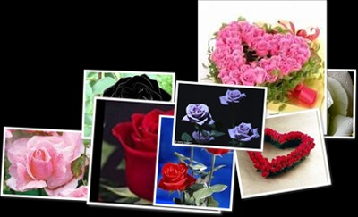 Lihat Mawar yang melambangkan cinta